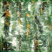 Tablou padure de conifere